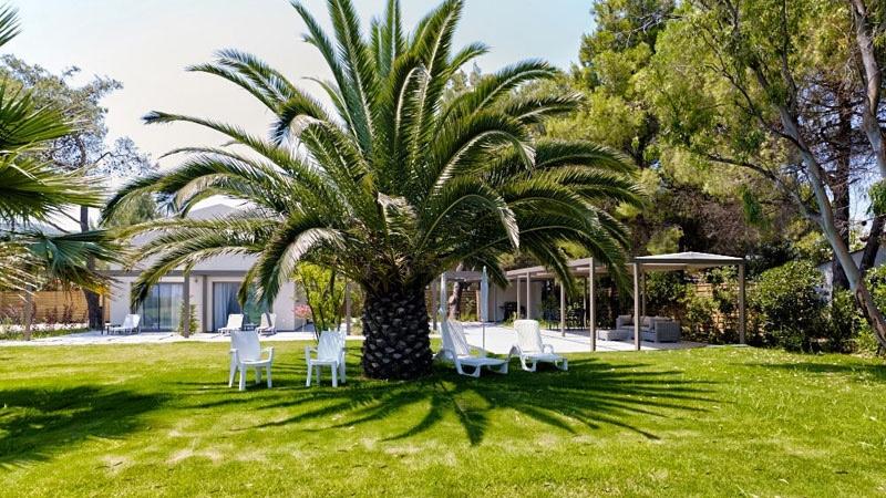 palmiye bahçesi